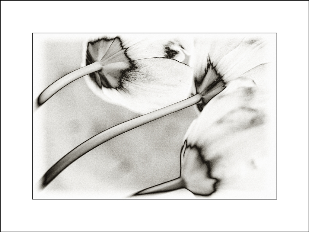 Natur abstrakt II