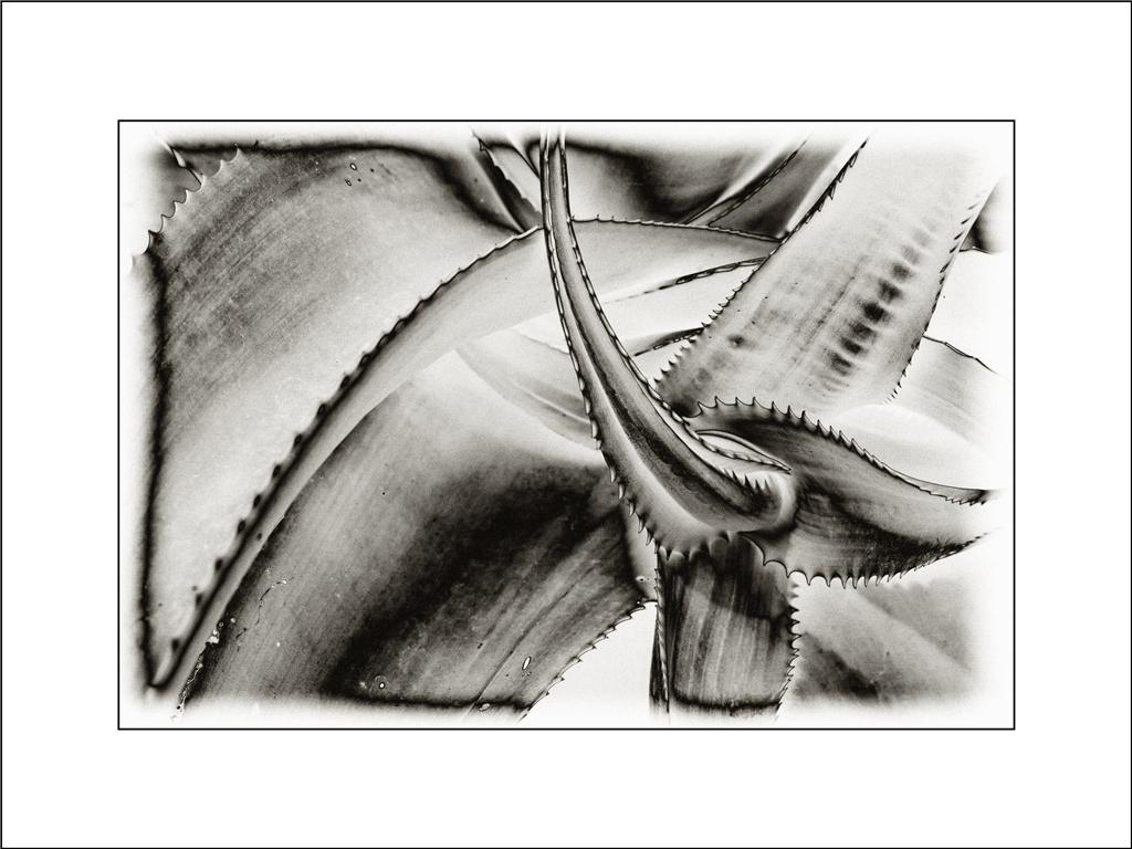 Natur abstrakt III