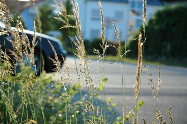 Natur am Straßenrand