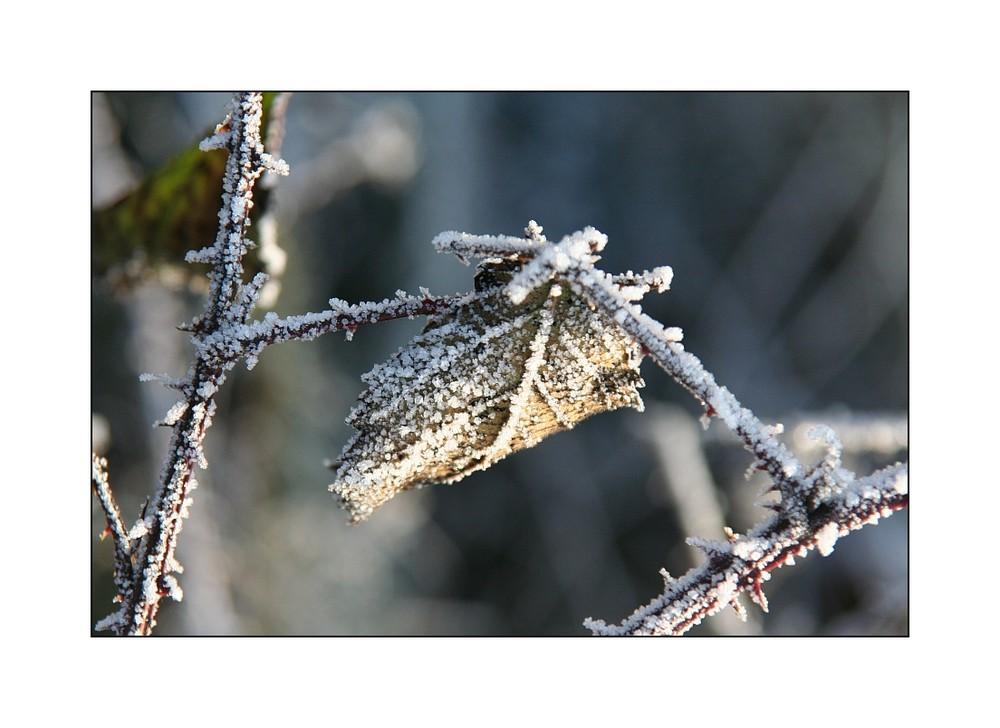 Natur auf Eis gelegt