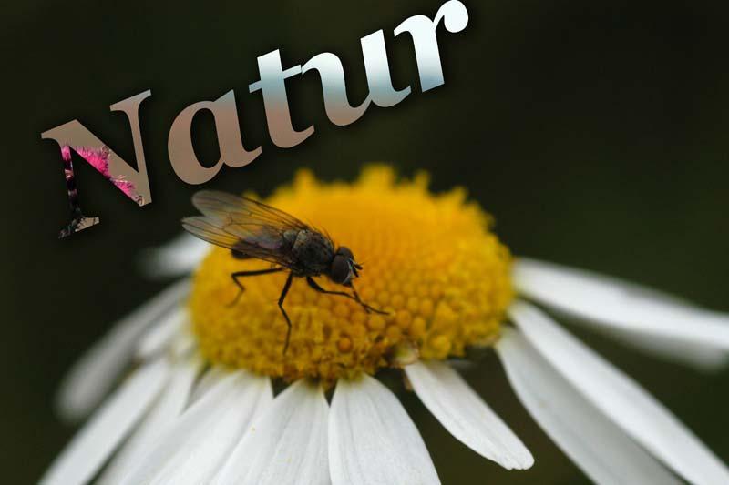 Natur :)