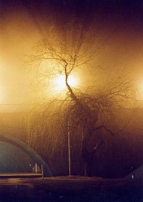 Natur bei Nacht
