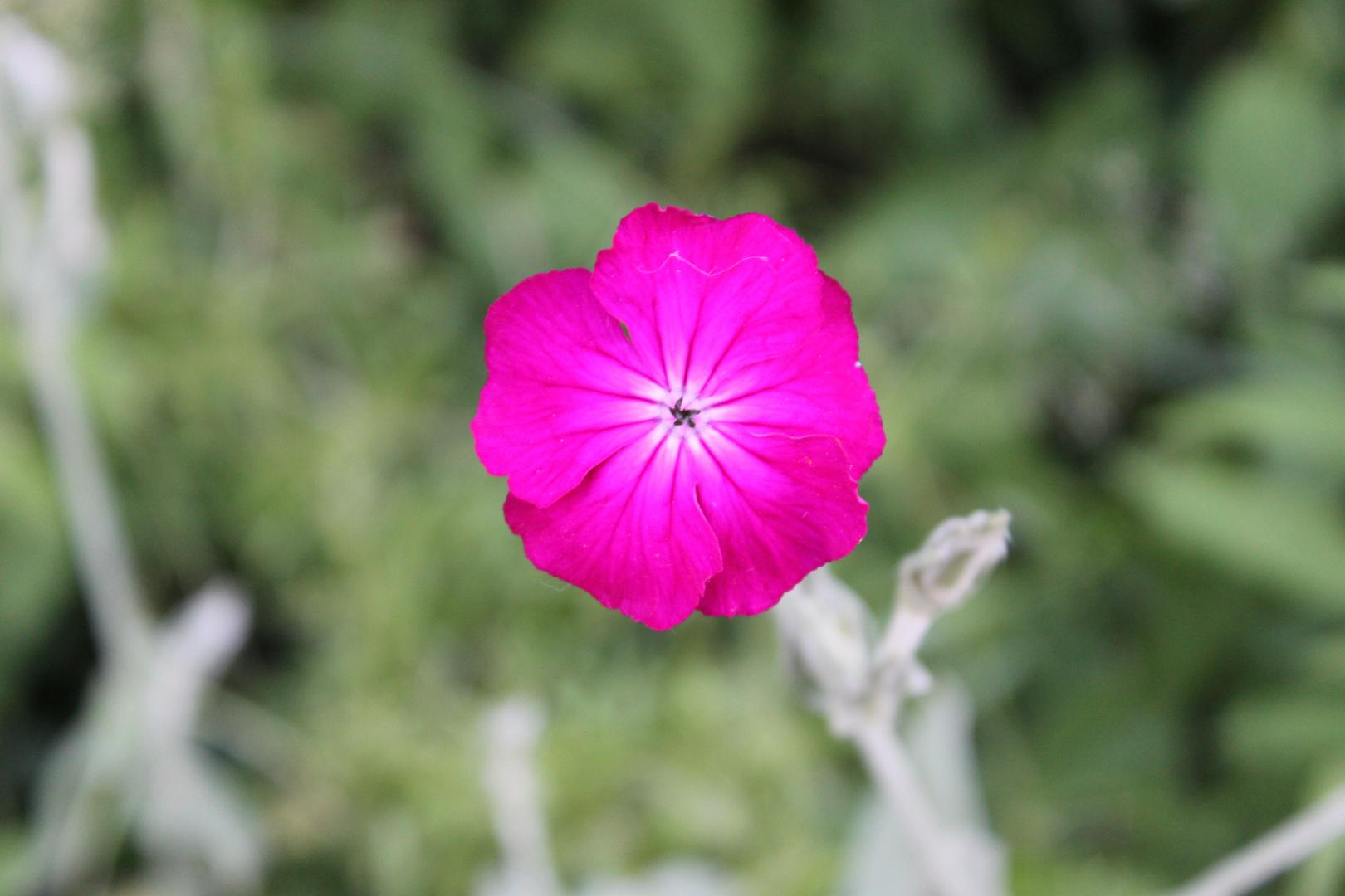natur farben