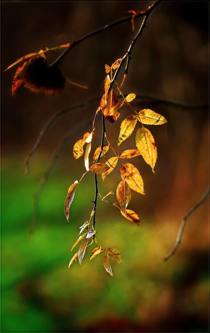 natur gold ...