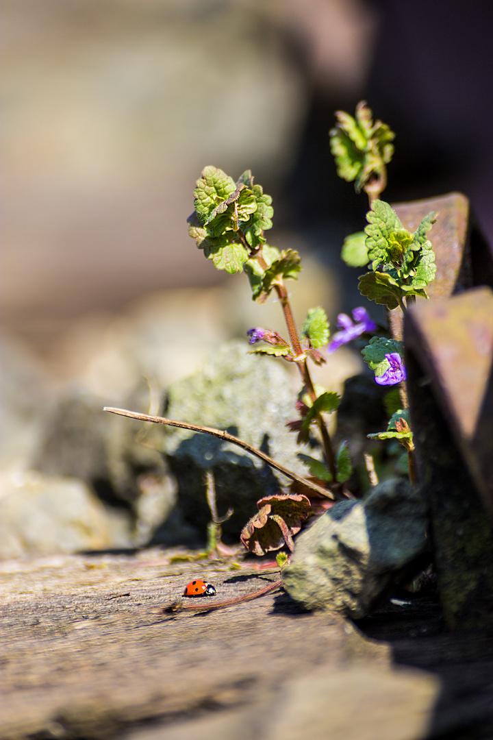 Natur im Gleis