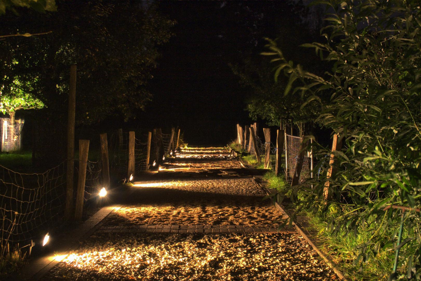 Natur im Licht 2