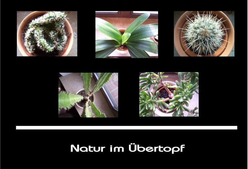 Natur im Übertopf