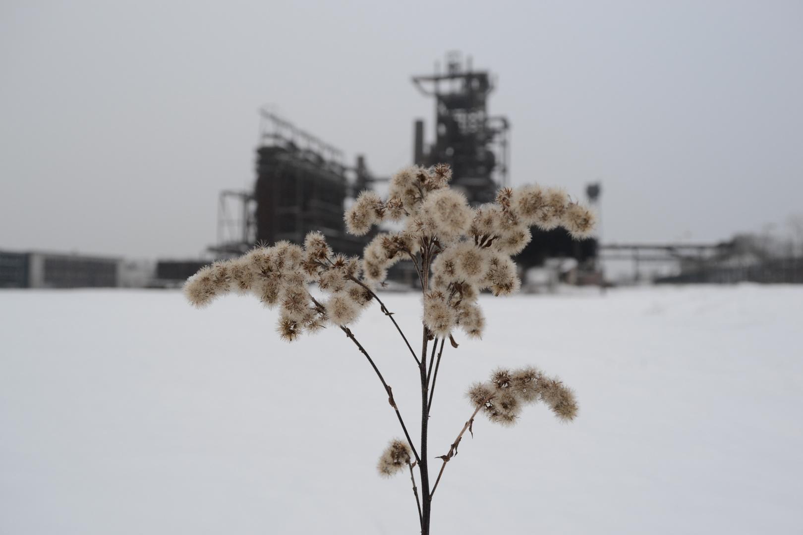 """"""" ....Natur im Winter"""""""