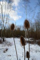 """""""..Natur im Winter.."""""""