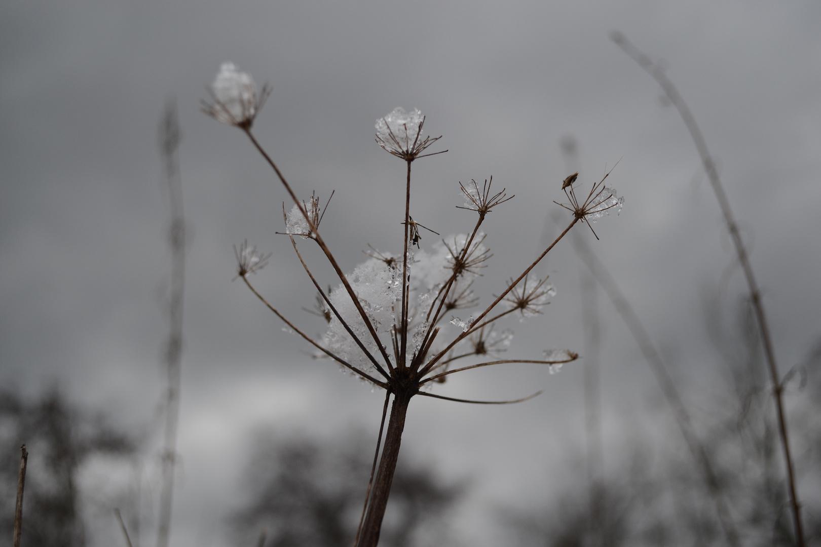 """""""Natur im Winter"""""""