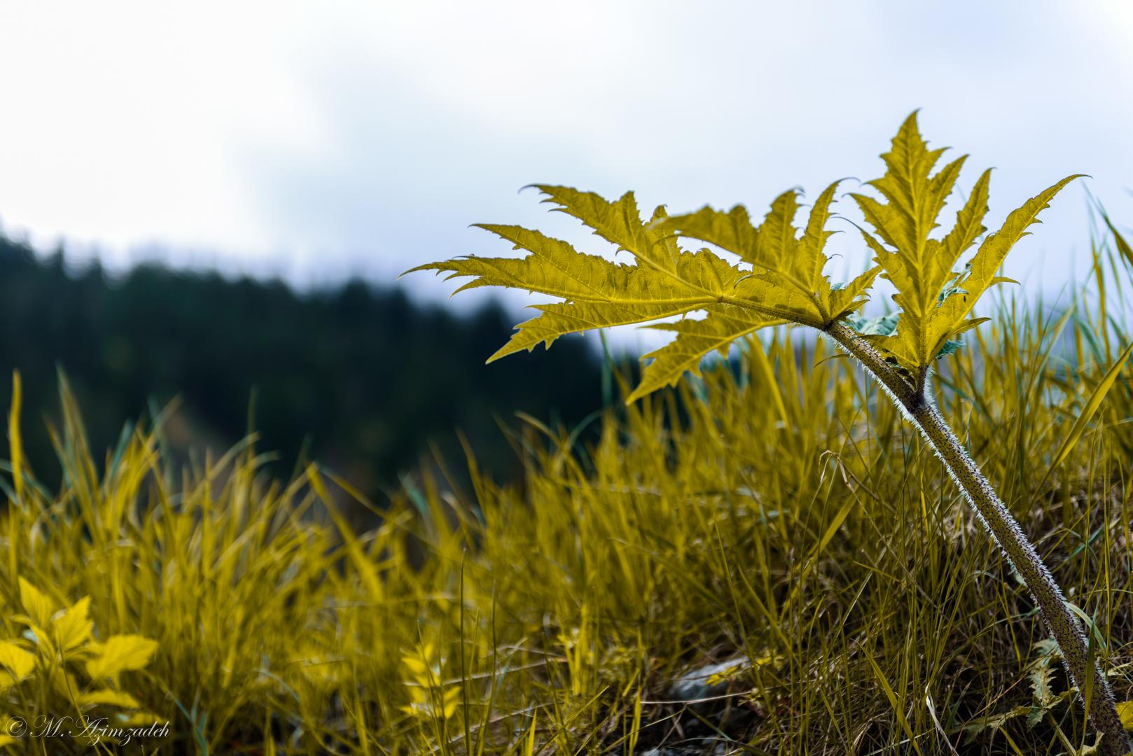 Natur in gelb