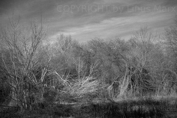 Natur in Grautönen - kurz vor Frühlingsbeginn
