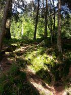 Natur in Hochschwarzwald Mummelsee