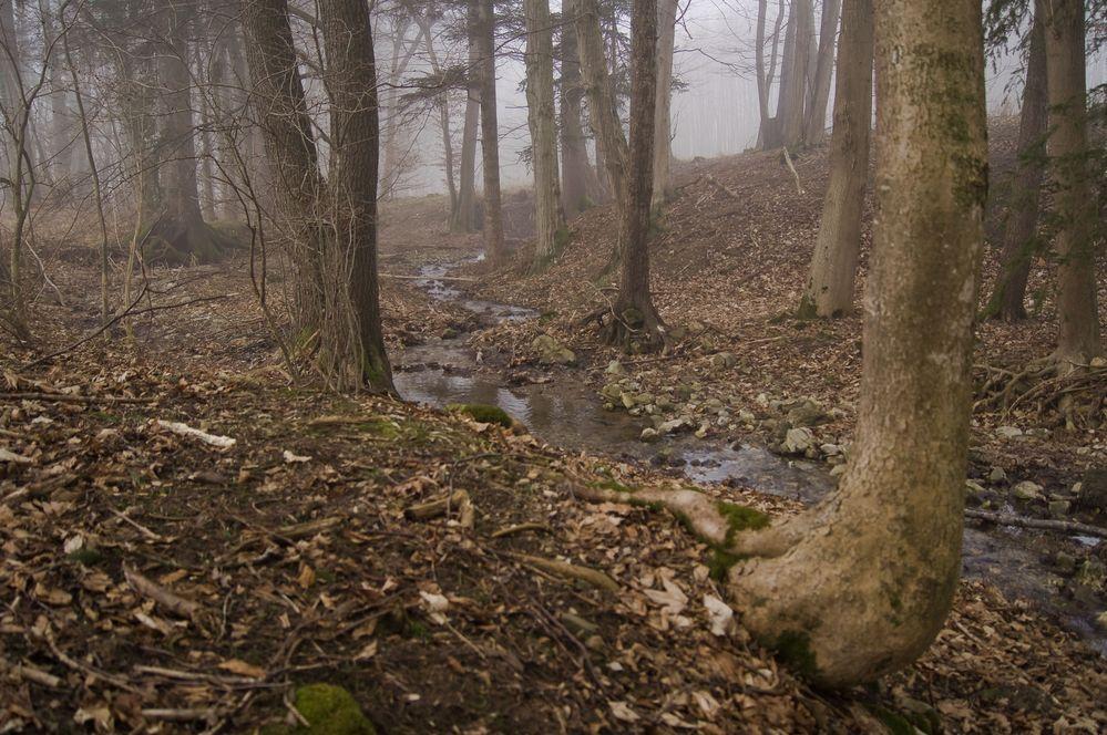 """Natur in ihrer Einfachheit """"Fortsetzung"""" von pander"""