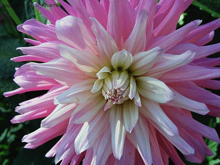 Natur in rosa