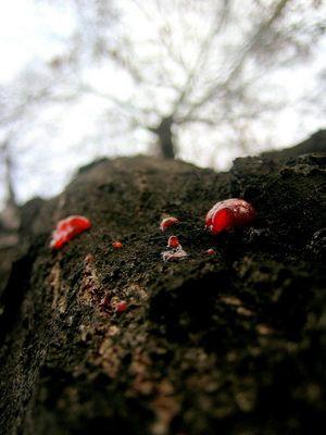 natur kann auch bluten