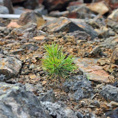 Natur kehrt zurück