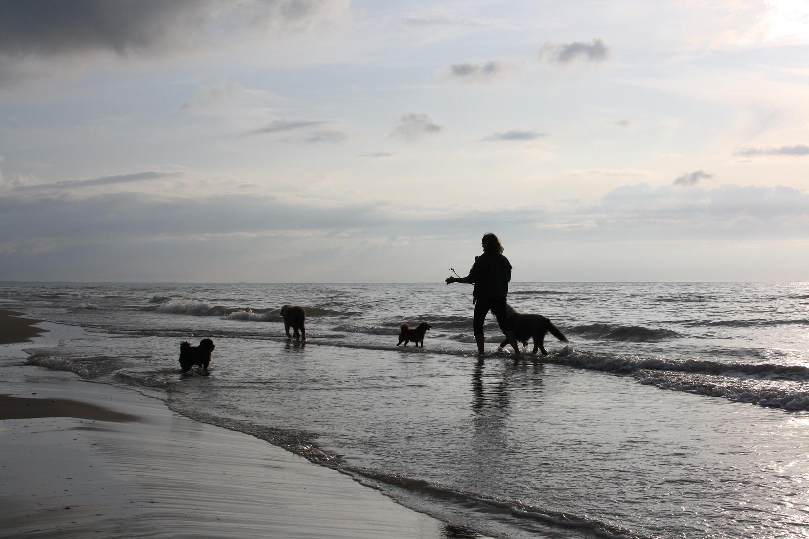 Natur Mensch und Hund.