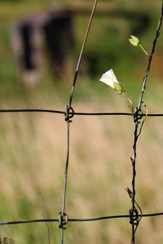 Natur ohne Grenzen