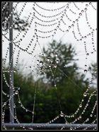 Natur-Perlen