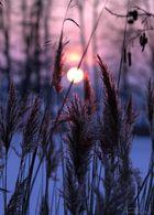 Natur pur im Winter