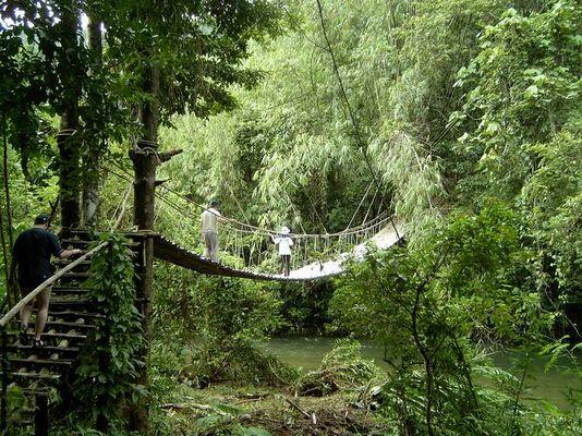 Natur pur (Jungle Khao Lak)