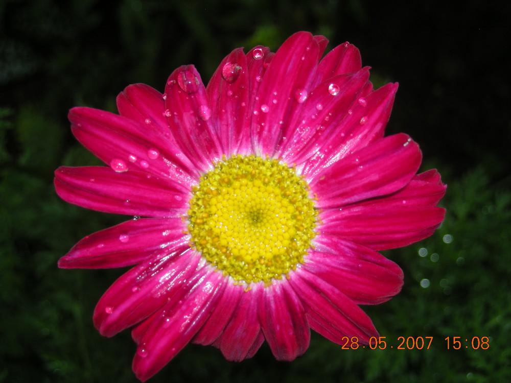 Natur pur..das Zusammentreffen von Wasser und Blume