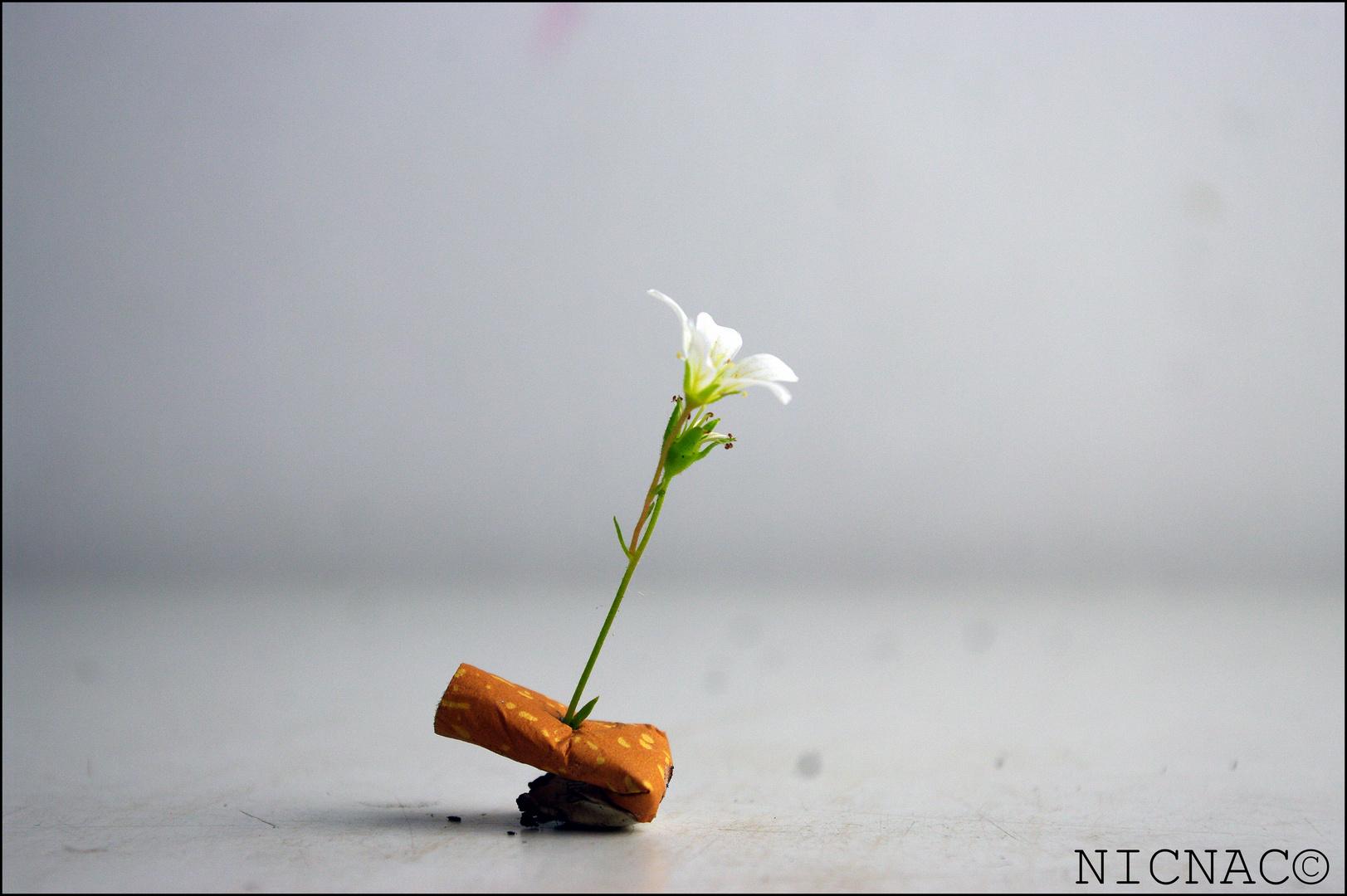 Natur schlägt zurück