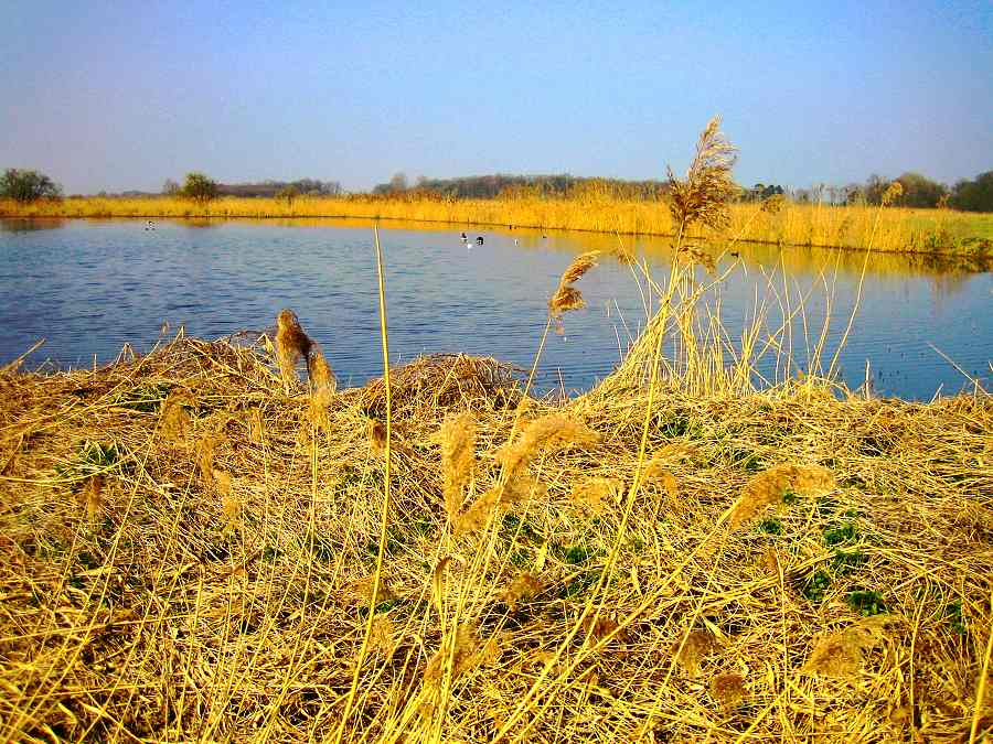Natur-See