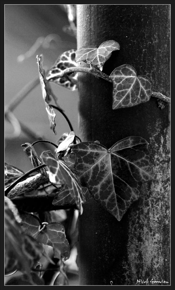 Natur setzt sich durch ... immer