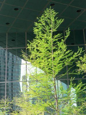 Natur Struktur