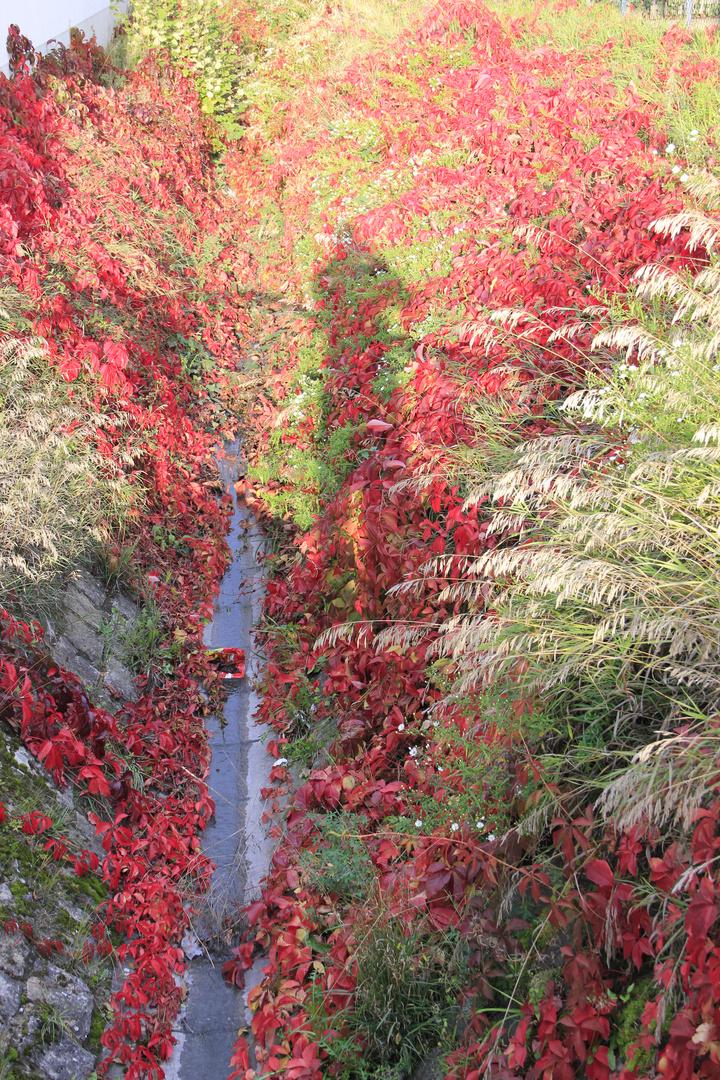 Natur und ihr Farbspiel