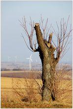 Natur und Windkraft