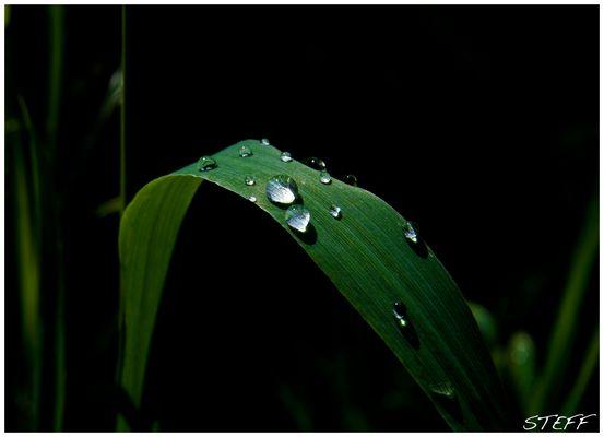 Natur Wassertropfen