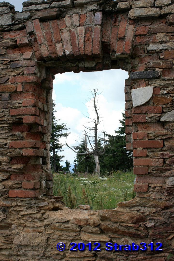 Natur zerstört - Zerstörung der Natur