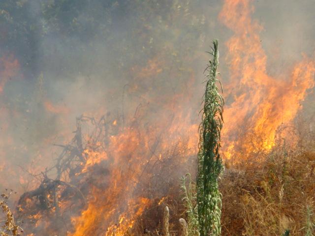 natura in fiamme