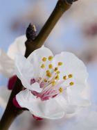 natura in fiore 1