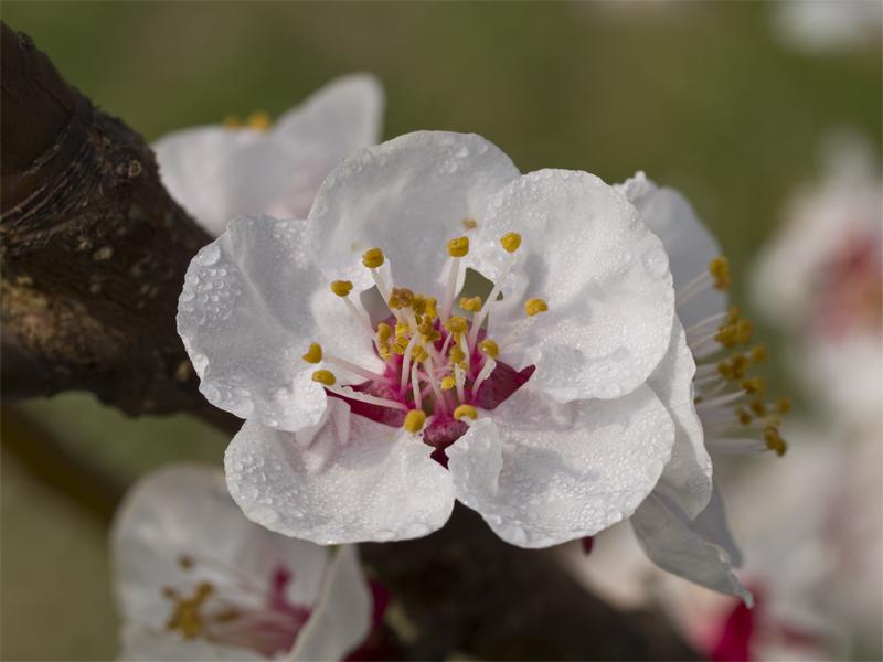 natura in fiore 2