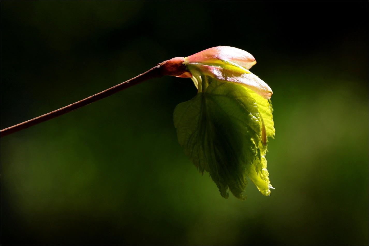 Natural Beautys (7)