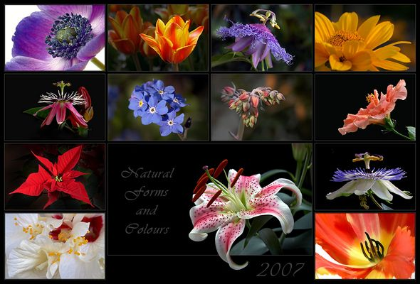 natural forms & colours 2007