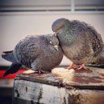 Natural Friends