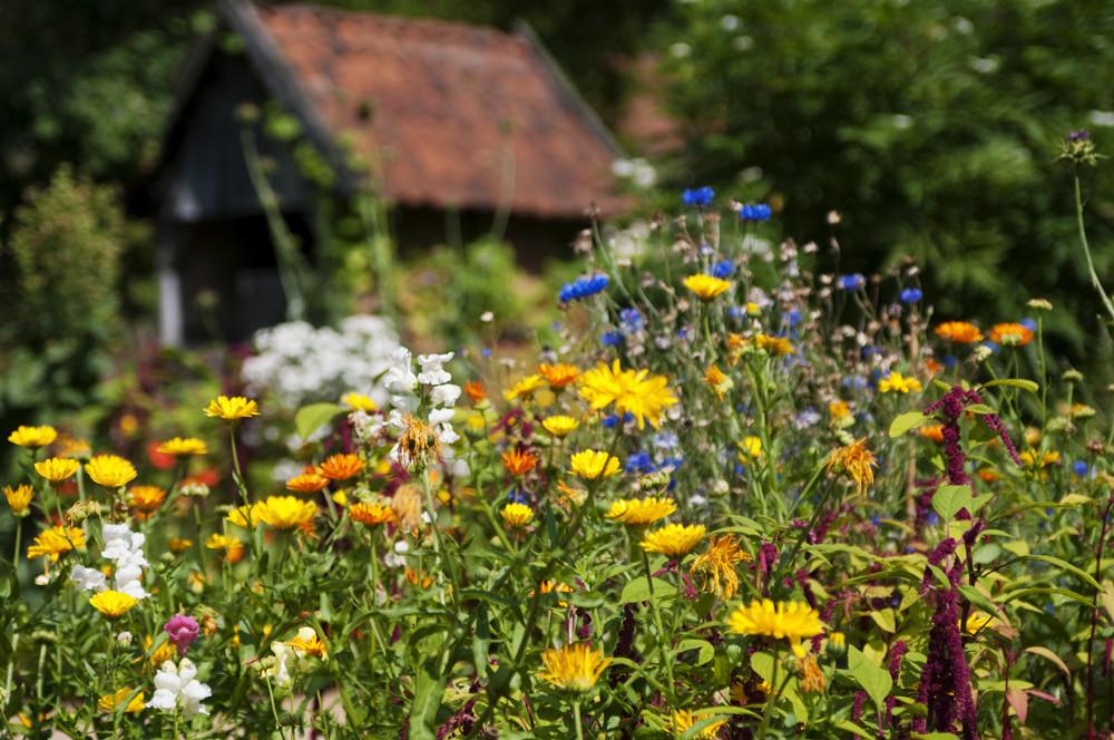 Natural garden.............