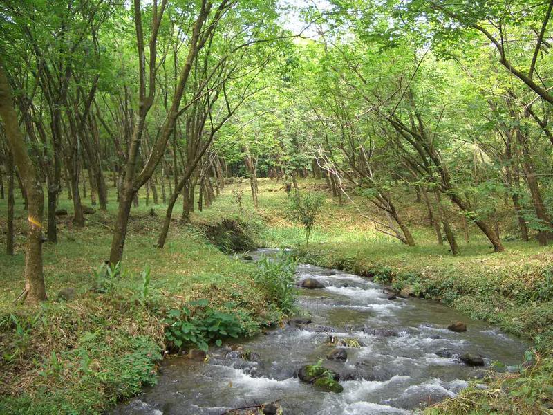 Naturaleza dentro del cultivo de hule