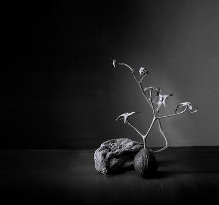 """""""Naturaleza muy muerta""""  Para el proyecto minimalismo, de Goyo"""