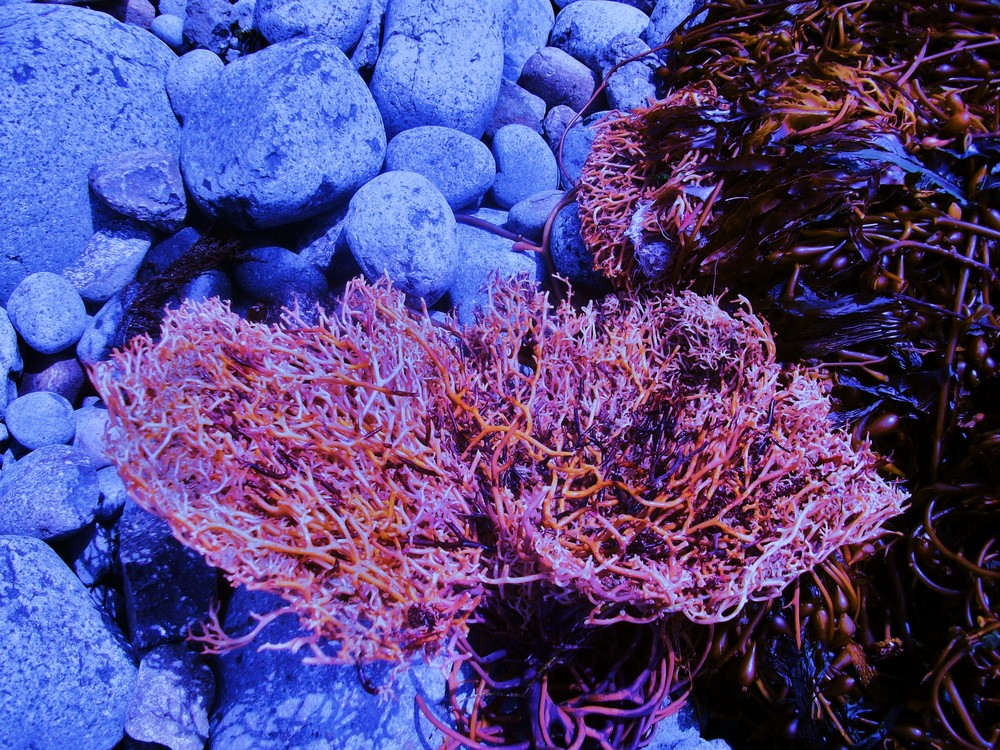 naturalza marina