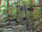 Naturbelassener Baum im Grunewald