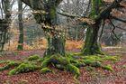 Naturdenkmal Halloh im Kellerwald