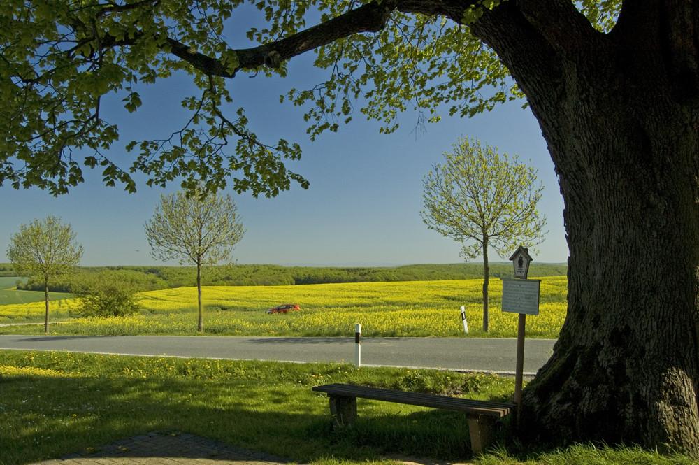 Naturdenkmal Sommerlinde