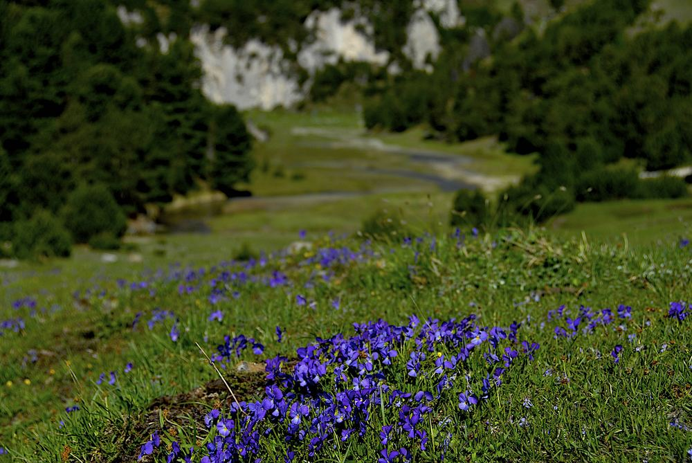 Nature am Lukmanier Pass