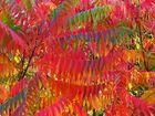 Nature Color...